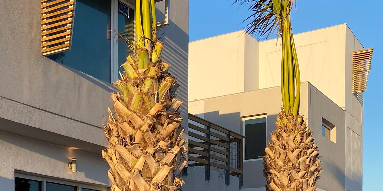 Lively Beach Mavericks exterior